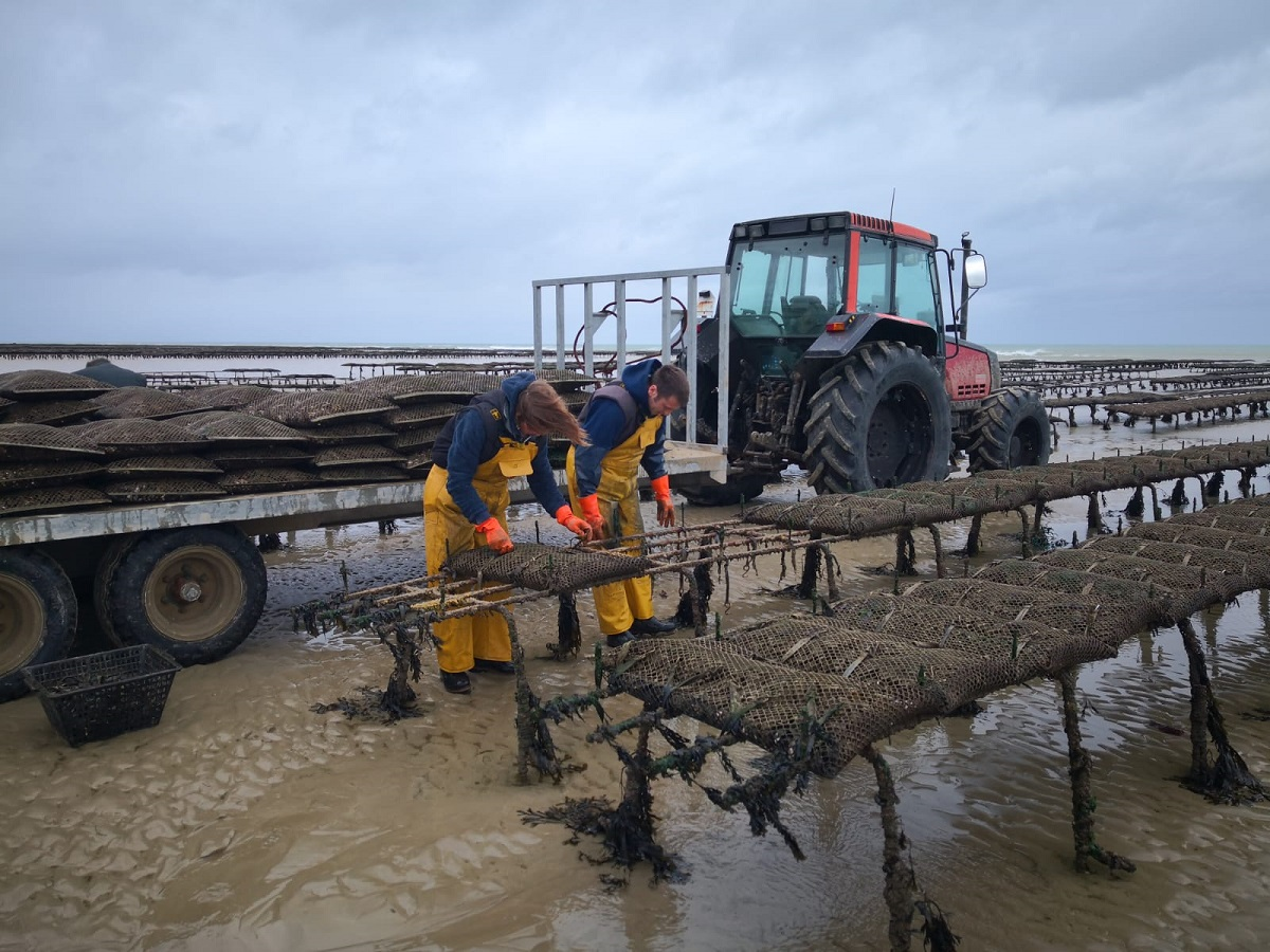 Fanny et Charles oyster farming in normandy credit fanny et charles